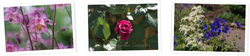 Testimonials from clients of Dragon Ascension Therapies