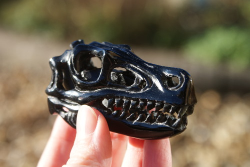 photo of 3 inch T-Rex black onyx right side daylight