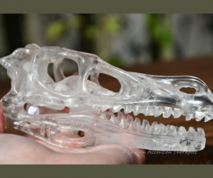 photo of a 5 inch clear quartz T-Rex skull